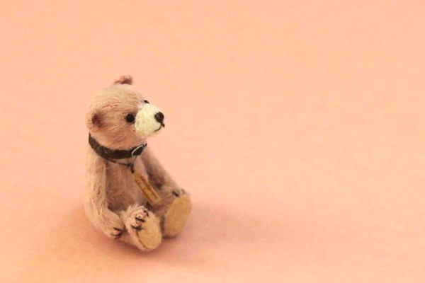 teddysakura10