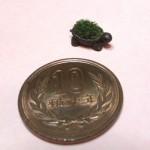 カメ 苔盆栽 制作過程