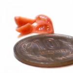tomato1507102