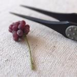 grape1509201