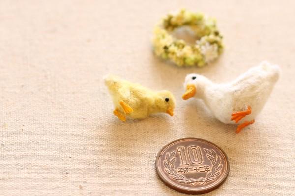 duck1603286