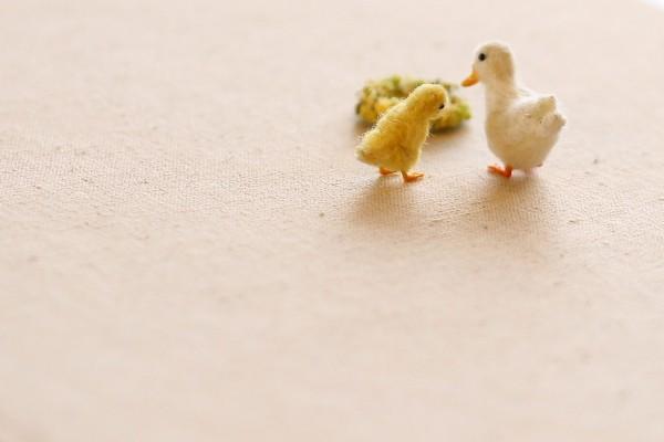 duck1603288