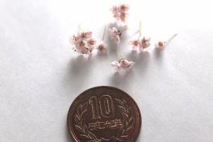 ミニチュア クレイフラワー 桜 ソメイヨシノ