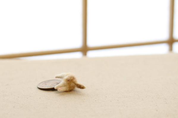 ミニチュア 羊毛フェルト 猫 植毛