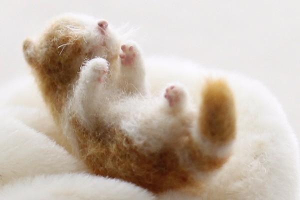 cat1604302