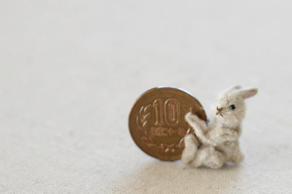rabbit ミニチュア ウサギ