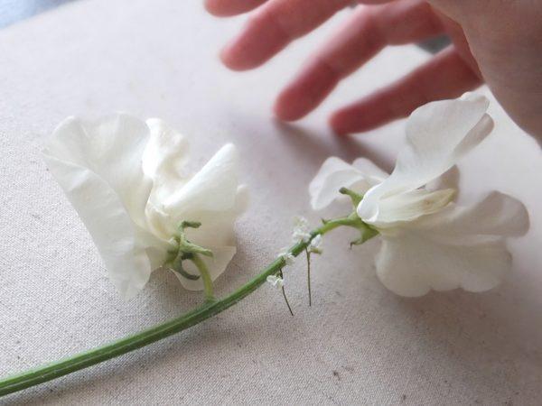 flower ミニチュア フラワー スイートピー