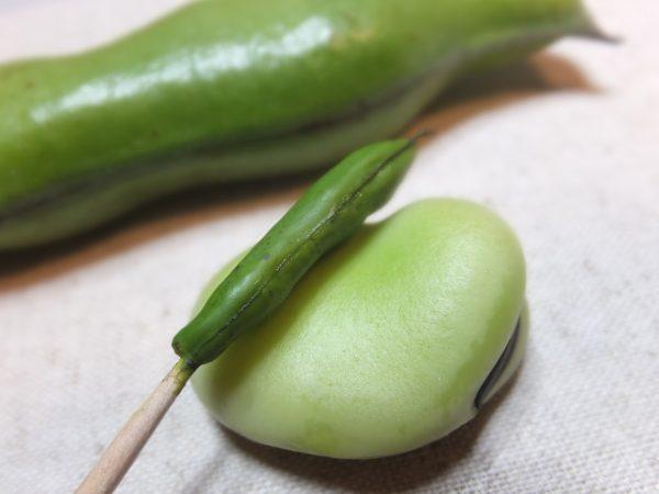 ミニチュア そら豆 制作過程