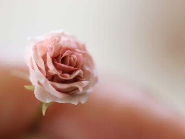 flower ミニチュア フラワー バラ