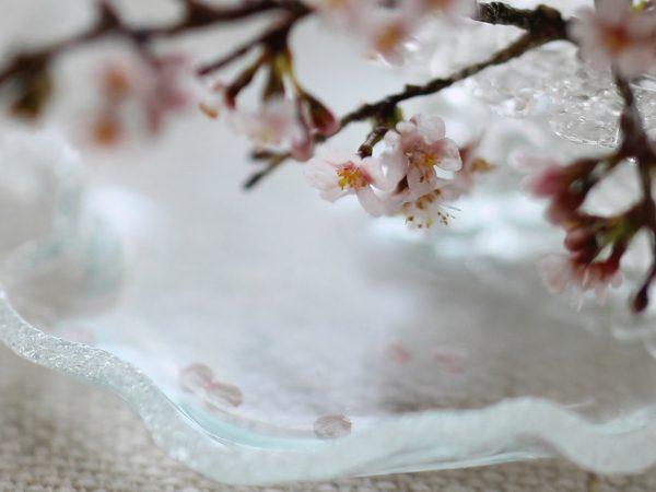 ミニチュア 桜 サクラ