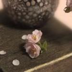 ミニチュア 八重桜