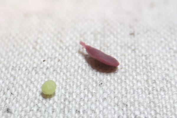 grape1509142