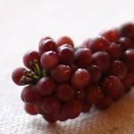 grape1509213