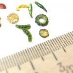 ミニチュアフード 野菜